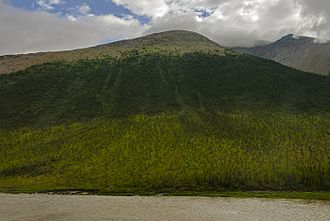 Tree line - Treeline on a mountain in the Canadian Arctic