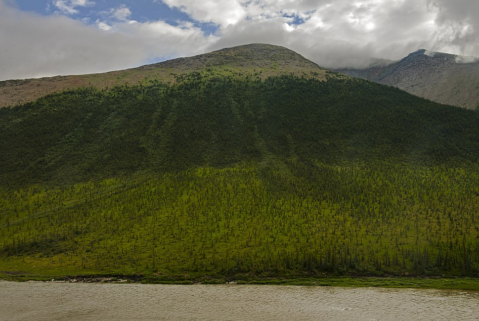 Treeline on mountain over Firth River in Ivvavik National Park, YT