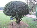 Trees planted by foreign dignitaries in the park of Jatiyo Smriti Soudho 01.jpg
