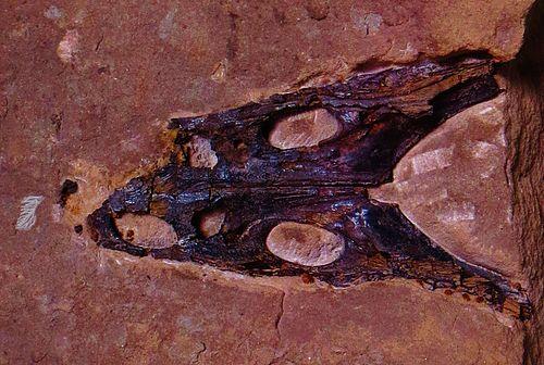 Trematosaurus