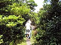 Trilha - PESP - Parque Estadual Sete Passagens - panoramio.jpg