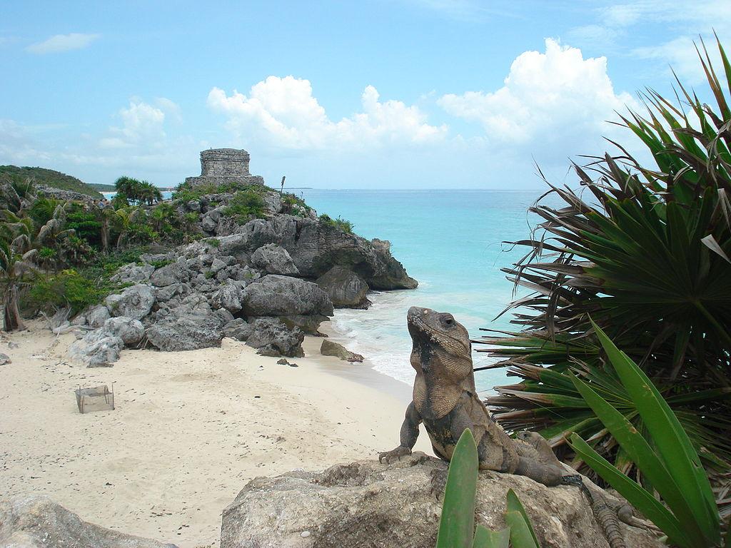 Parque Nacional TULUM Quintana Roo 1024px-Tulum_e_iguana