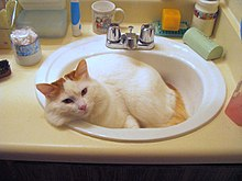 Cats Bathing Videos