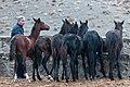 Turkmen Studfarm - Flickr - Kerri-Jo (24).jpg