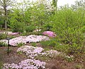 U.S. Botanic Garden in May (23481807130).jpg