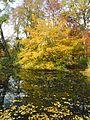 Ulm - Friedrichsau-See im Herbst 02.JPG