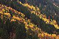 Val Aran reserva Artiga Lin 8936-01.jpg
