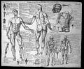 Valverde de Hamusco, five anatomical pen-drawings Wellcome L0030927.jpg