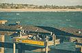 Ventura Pier Pigeons (17181898202).jpg