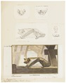 Vespertilio serotinus - 1700-1880 - Print - Iconographia Zoologica - Special Collections University of Amsterdam - UBA01 IZ20800175.tif