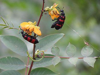 Vibrant Fauna.jpg