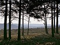 View along Black Gutter Bottom from the pine clump, New Forest - geograph.org.uk - 386853.jpg