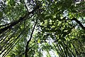 Virgin tropical forest in southern Thailand, Khlong Phanom, Surat Thani.jpg