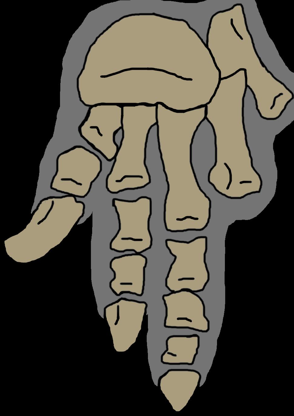 Vulcanodon pes