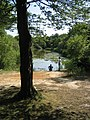 Wake Pond, Epping Forest - geograph.org.uk - 336218.jpg