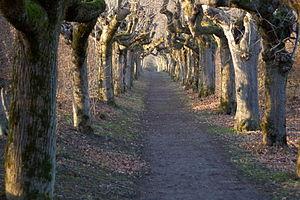 Schloss Warthausen - Tree allee