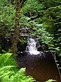 Waterfall in Strathyre Forest - geograph.org.uk - 869846.jpg