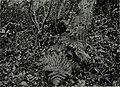 Western field (1905) (14592689838).jpg