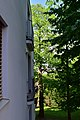 Wien-Hietzing - Naturdenkmal 721 - Edelkastanien (Castanea sativa).jpg