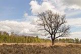 Wijnjeterper Schar, Natura 2000-gebied provincie Friesland 25.jpg