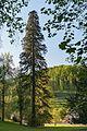Wiki DSC00114 Mammutbaum Fürstenlager Auerbach 431.2-29.jpg