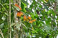 Wild Fruits (23785640796).jpg