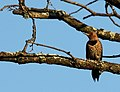 Wildlife birds 9 - West Virginia - ForestWander.jpg