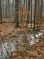 Wolbecker Tiergarten (12).JPG