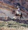 Woman on a donkey who rides in the mountains Tunisia.jpg