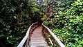 Wood Walkway, Lekki Conservation Center Lagos.jpeg