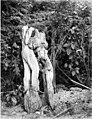Wooden structure, possibly remains of totem pole, Haines Mission, ca 1914 (CURTIS 2016).jpeg