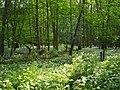 Woodland clearing - geograph.org.uk - 820688.jpg