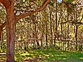 Woodland in Kooloonbung Creek Nature Park, Port Macquarie NSW.jpg