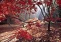 Woodland magic - geograph.org.uk - 1654225.jpg