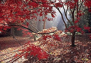 English: Woodland magic Shafts of sunlight thr...