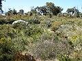 Yanchep National Park wildflowers.JPG