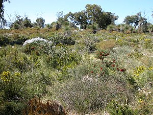 Yanchep National Park - Wildflowers in September