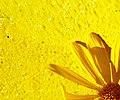 Yellowness (289515647).jpg