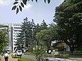 Yokogawa has huge trees - panoramio.jpg
