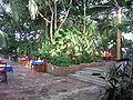 ZG-wnętrze Palmiarni Zielonogórskiej.JPG