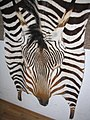 Zebra fur skin (2).jpg