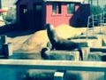 Zeehonden en zeeleeuwen verblijf.png