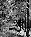 Zimski motiv 1927.jpg