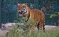 Zoo of Ahmedabad, India (4051885123).jpg
