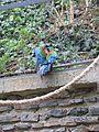 Zoo praha mg 009.jpg
