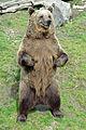 Ähtärin karhut 13.jpg