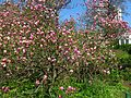 Ботанічний сад ім. І.Фоміна IMG 8320.jpg