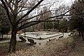 Ботанічний сад ім. акад. Фоміна IMG 4075.jpg