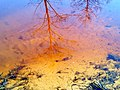Вешние воды лесного Поветлужья (2).JPG
