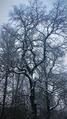Волшебство холода 14.png